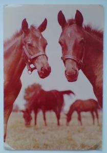 Konie na starych pocztówkach