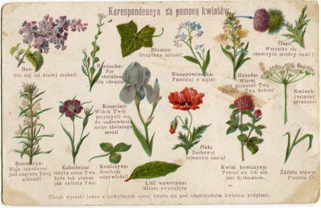 """Korespondencya za pomocą kwiatów - stara pocztówka """"Technograf"""" ok. 1910"""