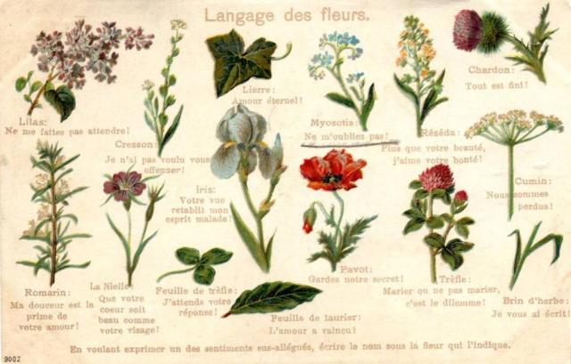 Langage de fleurs czyli mowa kwiatów po francusku (fot. Riksar, delcampe.net)