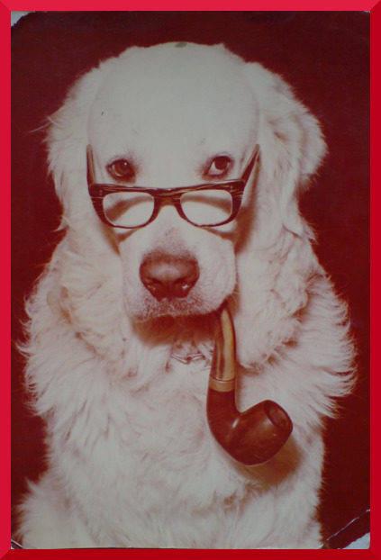 Pies co palił fajkę, kartka fotograficzna z PRL