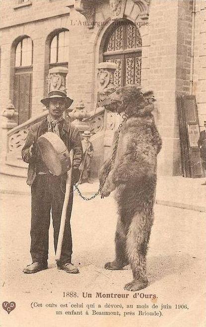 Demonstrator niedźwiedzi