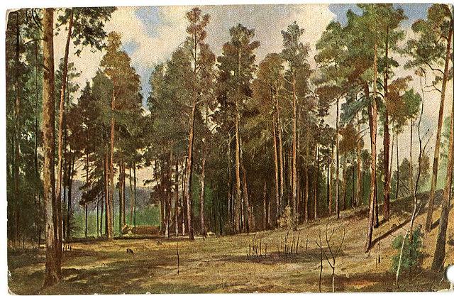Stara Pocztówka, Szyszkin, Las A. J. Ostrowski (2)
