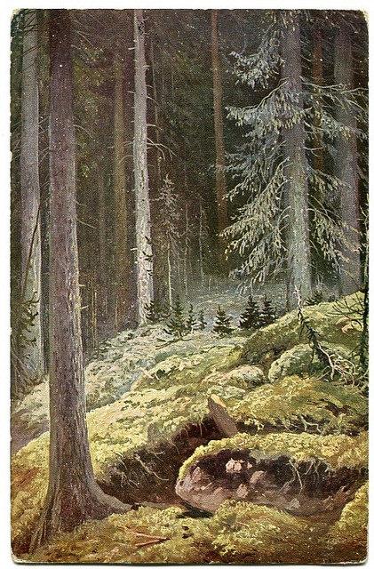 Stara Pocztówka, W lesie, Szyszkin, A.J. Ostrowski (2)
