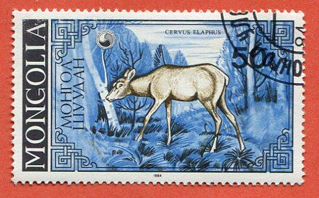 Mongolia Zwierzęta Rogate