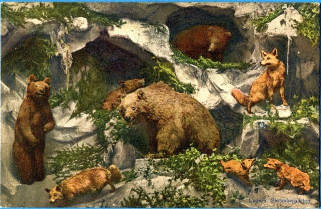 luzern-gletschergarten-c-1930-lis-i-niedzwiedz